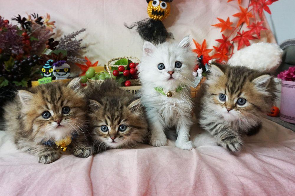 その他の子猫